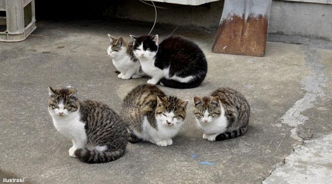 Unduh 61+  Gambar Kucing Orang Paling Lucu HD